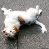 Roddy The Dog